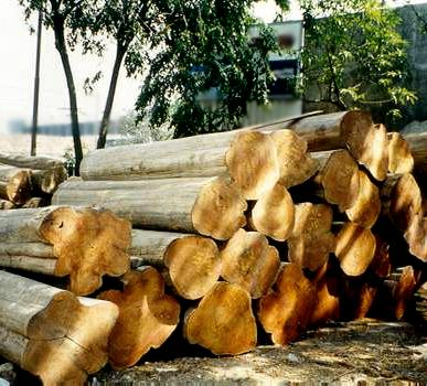Teak Tectona Timber