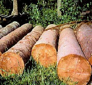 Balau Timber