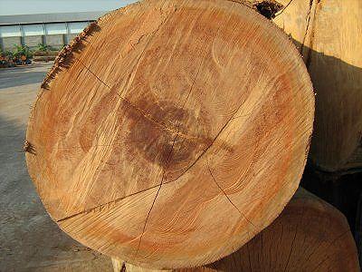 Keruing Log